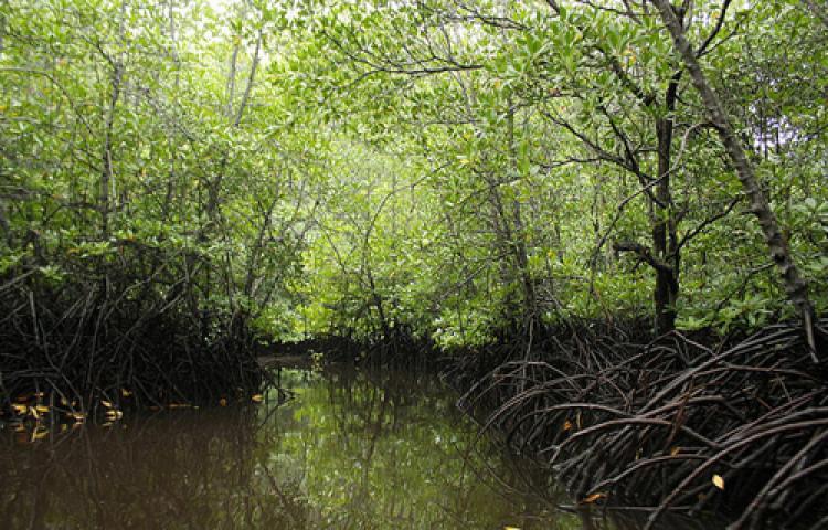 MANGROVE-FOREST.html